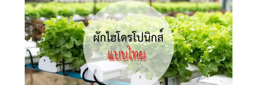 การปลูกผักแบบไทย