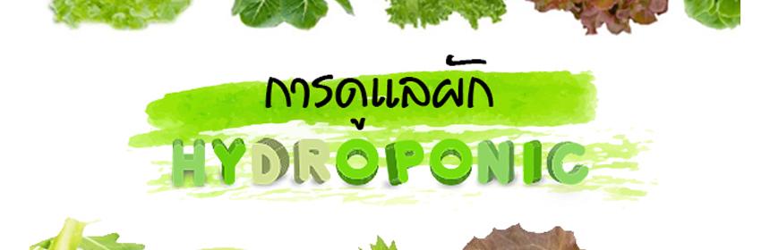 การดูแลผักไฮโดรโปนิกส์