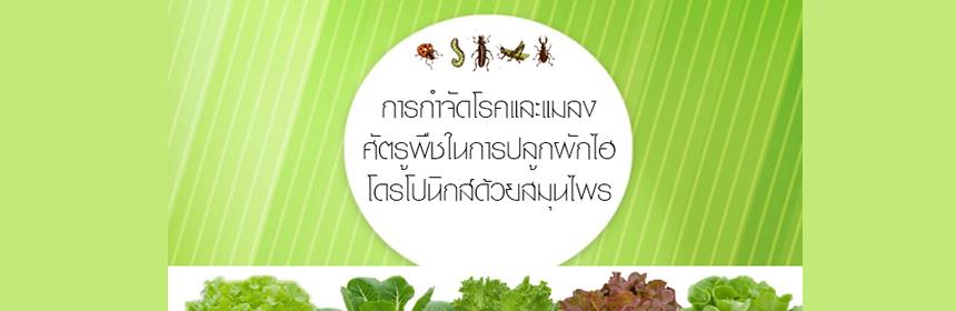 การกำจัดโรคและแมลงศัตรูในผักไฮโดโปรนิกส์