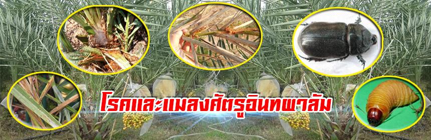 โรคและแมลงศัตรูอินทผาลัม